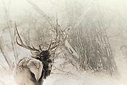 Deer/Elk
