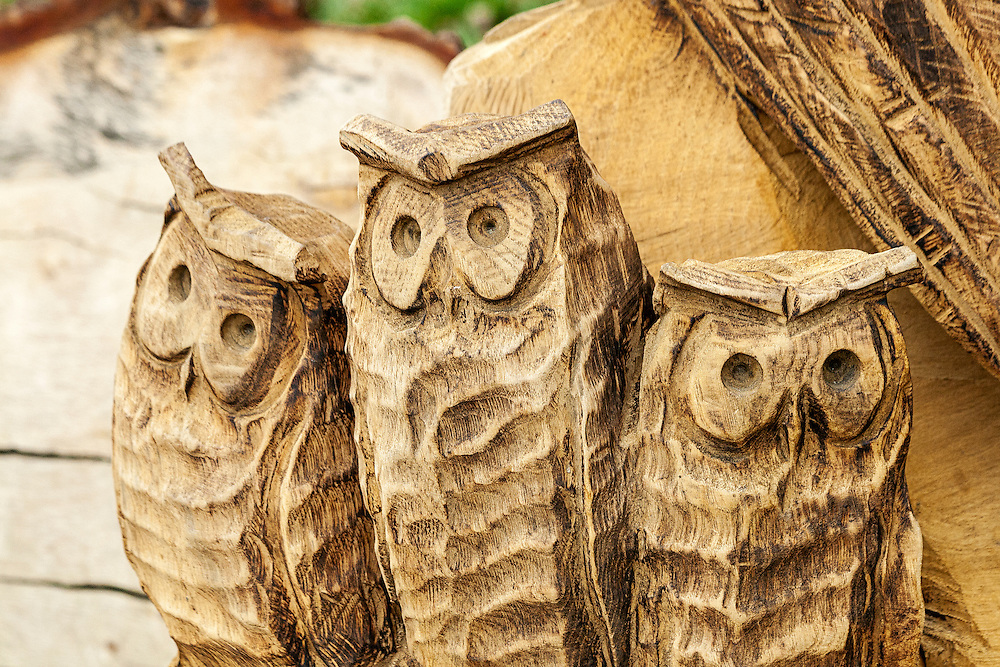 Three Owls carved in a tree trunk