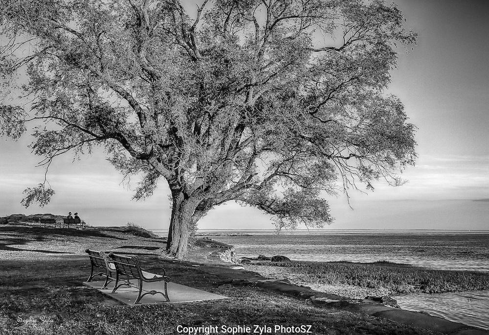 Under the Tree at Savin Rock