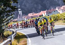 08.07.2019, Wiener Neustadt, AUT, Ö-Tour, Österreich Radrundfahrt, 2. Etappe, von Zwettl nach Wiener Neustadt (176,9 km), im Bild Peloton in der Wachau // Peloton in der Wachau during 2nd stage from Zwettl to Wiener Neustadt (176,9 km) of the 2019 Tour of Austria. Wiener Neustadt, Austria on 2019/07/08. EXPA Pictures © 2019, PhotoCredit: EXPA/ JFK