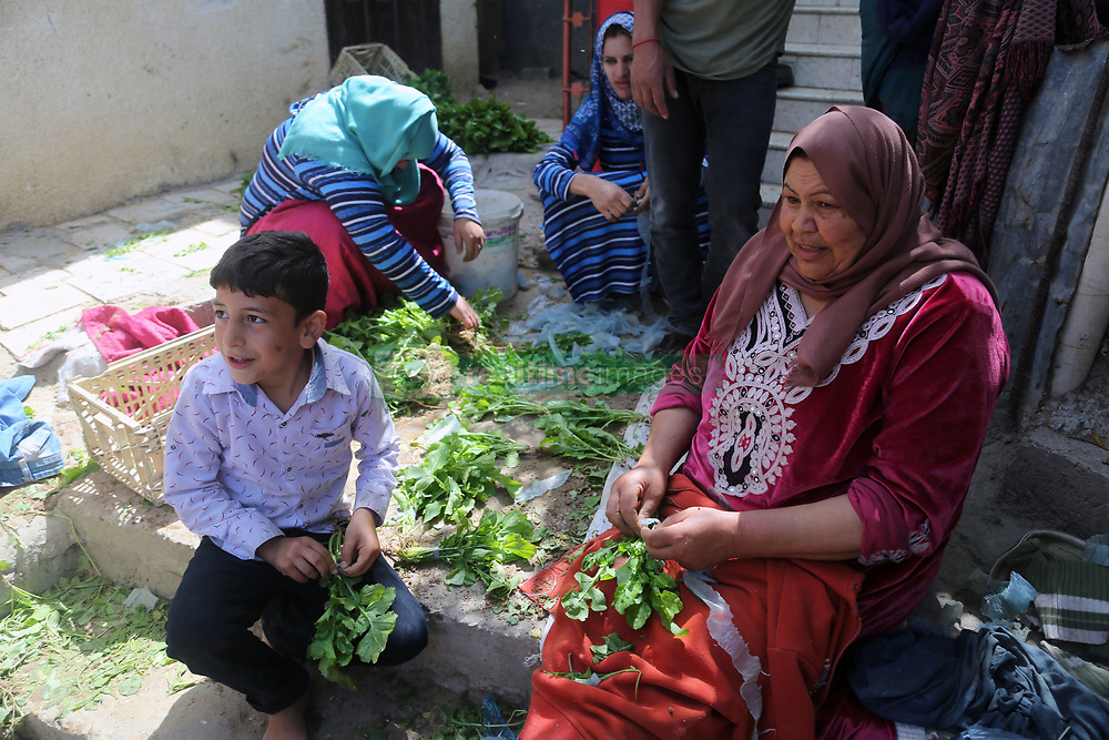May 22, 2019 - Gaza, gaza strip, Palestine - Palestinian family  sort through arugula produce before he heads to sell it at a market, in an impoverished area in Beit Lahia in the northern Gaza Strip on May 22, 2019. (Credit Image: © Majdi Fathi/NurPhoto via ZUMA Press)