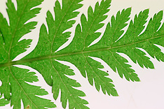 leaves, bladeren