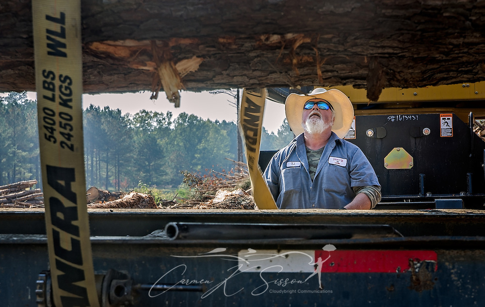 T.J. Branham, of Tracy's Logging, straps down a load of loblolly pine, Nov. 16, 2016, in Steadham, S.C. The timber will go to a Georgia-Pacific plant. (Photo by Carmen K. Sisson)