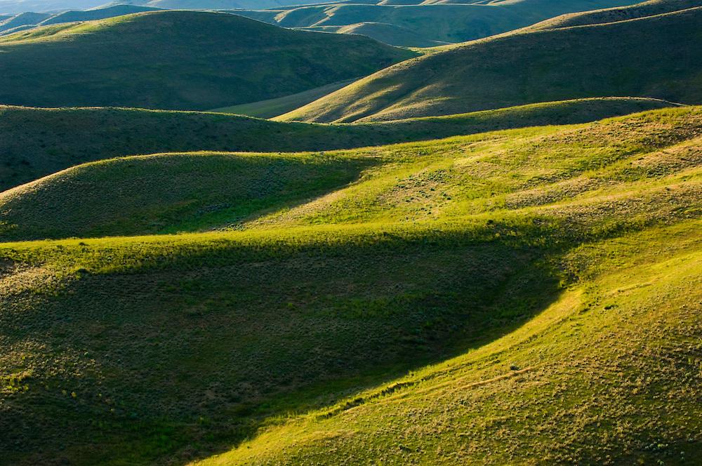 Detail of green vegetation on Boise foothills.