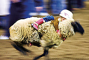 Fiesta Rodeo 040805