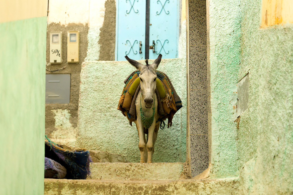 Moulay Idriss Zerhoun Medina, Middle Atlas, Morocco, 2016-08-14.<br />