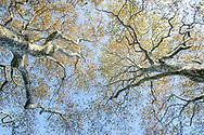 Trees, Southampton, NY