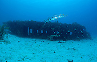 Barracuda and Airplane Wreck....Shot in British Virgin Islands