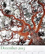 Audubon - The World of Trees, 2013 calendar December page