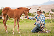 Jeff Minor with a Hackamore he crafted pauses to check his new Filly Mariah.