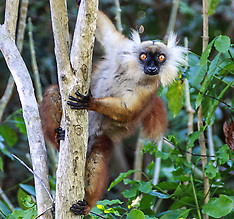 Madagascar - Research in Paradise