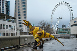 © Licensed to London News Pictures. 13/02/2020. LONDON, UK. A Fukui raptor steps outside.  The raptor is from Erth's Dinosaur Zoo, one of the acts forming part of Imagine Children's Festival at Southbank Centre for half term 12 to 23 February 2020.   Photo credit: Stephen Chung/LNP