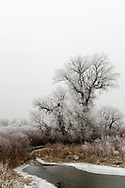 A frosty tree near Burns, Wyoming, on Friday, Feb. 9 2018.