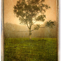 Lone tree at sunset in fog with a gritty look.