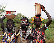 Africa, Ethiopia, Debub Omo Zone, Mursi tribesmen. A nomadic cattle herder ethnic group located in Southern Ethiopia, close to the Sudanese border. young girls with warthog fangs earring decoration