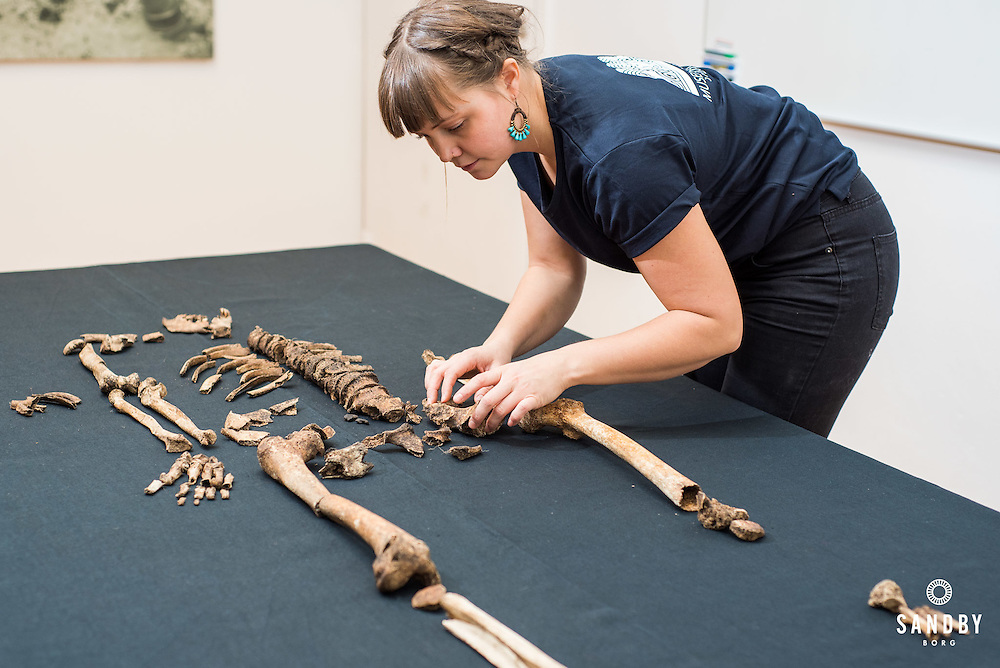 Clara Alfsdotter inspects skeleton from Sandby Borg
