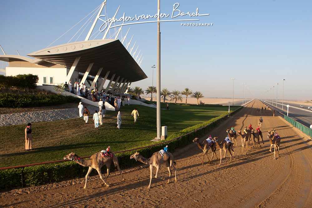 Camel racing on the Nad al Sheba racetrack. The former president of the UAE, Sheikh Zayed, endorsed camel racing and provides financial support for citizens who are caretakers of camels. Currently, there are approximately 14,000 active racing camels in the UAE, which require large numbers of people to maintain them and keep them in top condition. Workers to tend the camels many times come from neighboring states such as Pakistan and Oman since the sport provides both indirect and direct financial support for thousands of people due to its popularity as a national pastime.