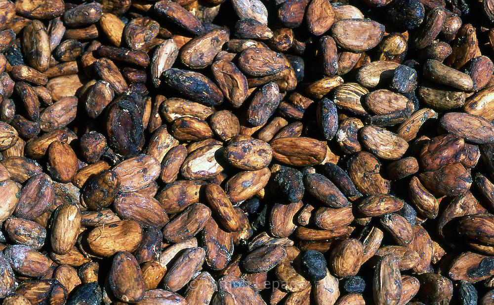 Cacao en proceso de secado  Cacao. Después de fermentados, los granos son colocados al sol por unos cuatro o cinco días, tiempo en que se ponen rojizos u oscuros. Cabe destacar que para la elaboración del chocolate son indispensables las semillas de cacao. 2001 (Ramón Lepage / Orinoquiaphoto)  Dried process of Cocoa. After fermented, the grains are placed to the Sun for approximately four or five days, time in which they become reddish or dark. It's necessary to emphasize that for the elaboration of the chocolate the cocoa's seeds  are indispensable. 2001 (Ramon Lepage / Orinoquiaphoto)