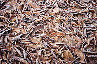 Frosty leaves on the ground