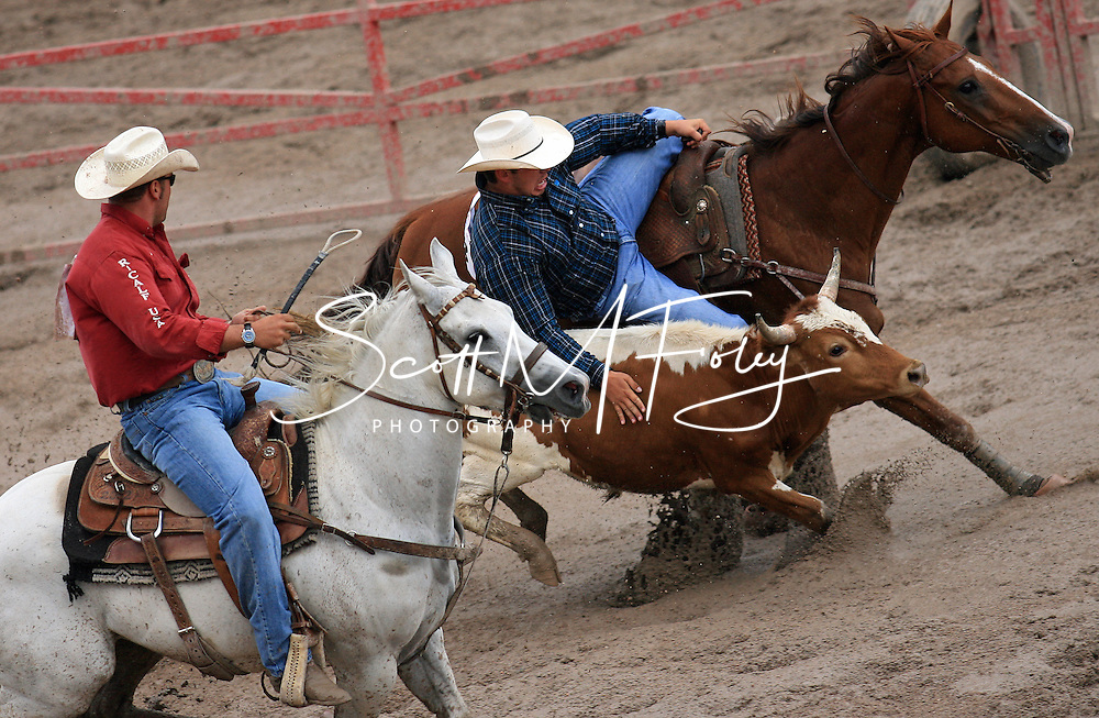 Steer Wrestler and Co-CFD Champion Anton R Helfrich gets in done in 14.9 securing the victory on Championship Sunday.  Helfrich and William Alois Beierbach shared the Steer Wrestling CFD CHampionship, 29 July 2007, Cheyenne Frontier Days