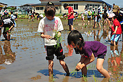 """Rice field Art or Tambo Art.<br /> In northern Japan the small village of Inakadate plants five different varieties of rice all different colours to produce.   """"Rice field art""""<br /> <br /> Children join in the fun of planting the rice."""