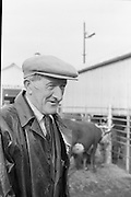 Dublin Cattle Market. Patrick Cranley, Marketstown, Co. Carlow, who is selling cattle at the market..25.04.1962
