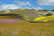 Colorful Rolling Hills of Central Valley