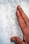 Nederland, Nijmegen, 22-1-2008..Foto niet gebruiken bij artikelen over  dierenmishandeling, of dierenleed . ..Muggen in het dierenlaboratorium van het UMCN. ..Zij worden gebruikt in de zoektocht voor een medicijn tegen malaria, een tropische ziekte die vooral in arme, derdewereld landen slachtoffers maakt...Foto: Flip Franssen