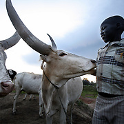 Panthar Machar, a 12-year-old catlle hearder, smiles at one of his favorite cows as the sun goes down over cattle camp. Panthar, a Dinka, lives in south Sudan, a poor isolated area home to the Dinka --  the impossibly tall and rugged pastoralists who after suffering 50 years of war are finally witnessing peace, development, and change.