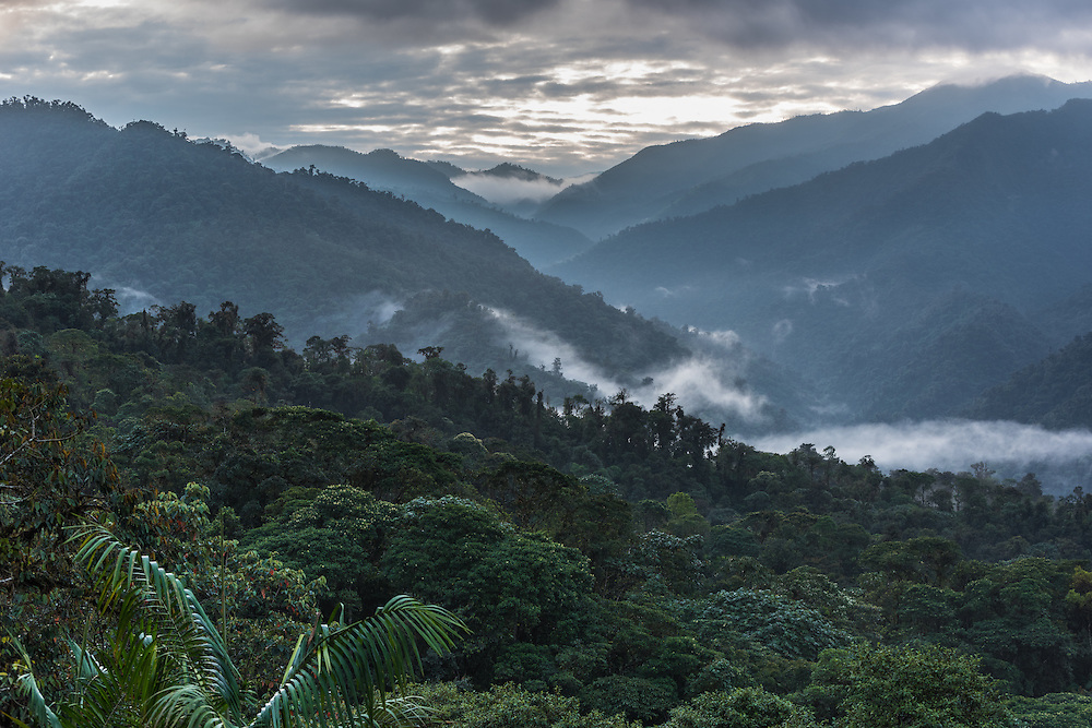 Clouds roll over the hills of the Santa Lucia Cloud Forest, Ecuador.