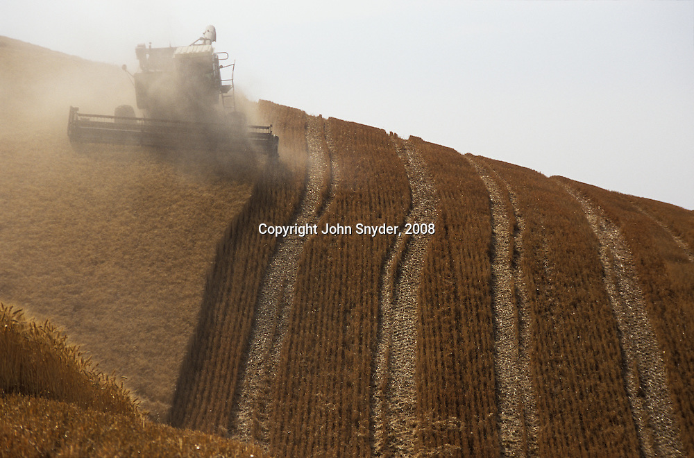 The Palouse region, comprising 4000 square miles of wind-deposited hills in Eastern Washington and Northern Idaho, is one of the most productive dry-farming regions of the world, boasting bountiful harvests of wheat, peas, and lentils..