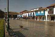 Dog walking down street in Plaza de Armas  Cusco, Peru