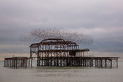 © Licensed to London News Pictures. 11/11/2017. Brighton, UK. Starlings murmuring at sunset over the Brighton West Pier, today 11th November 2017. Photo credit: Hugo Michiels/LNP