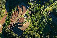 France, Languedoc Roussillon, Gard, Cevennes, Valleraugue, Yolande Nouguier, La Pieyre, culture d'oignons doux des Cévennes, vue aérienne