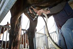 Paardenmelkerij De Beck 2012