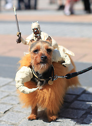 © Licensed to London News Pictures. London, UK. 04/05/2014. London, UK.  Yorkshire terrier Missy, aka Bantha, on costume at the Sci-Fi London Dogshow in Stratford East Picturehouse, east London .Photo credit: LNP