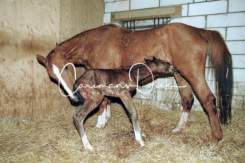 Foal <br /> Photo © Dirk Caremans