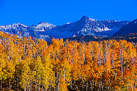 Fall color, Last Dollar Road between Ridgway and Telluride (with the Sneffels Range in background), Colorado USA.