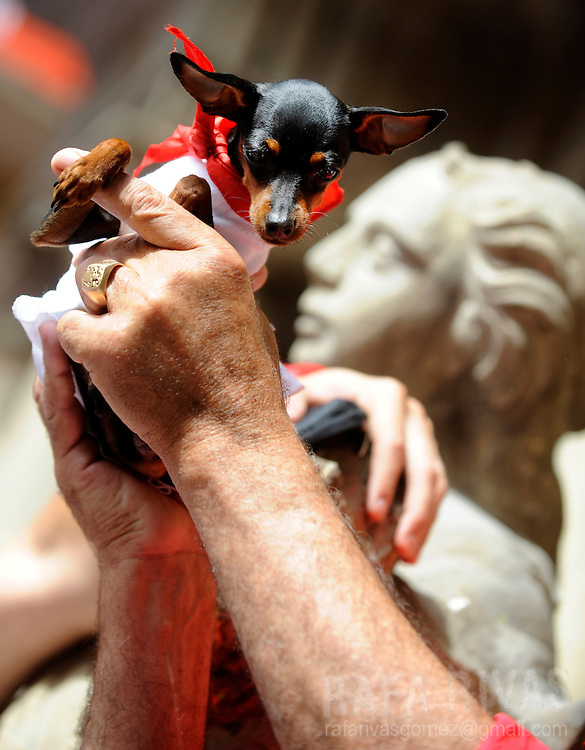 A man holds his dog wearing the traditional red scarf during the 'Chupinazo' to mark the start at noon sharp of the San Fermin Festival on July 6, 2010 in front of the Town Hall of Pamplona, northern Spain. The festival is a symbol of Spanish culture, despite heavy condemnation from animal rights groups, and attracts thousands of tourists to watch the bull runs.  PHOTO/Rafa Rivas