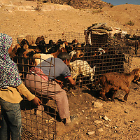 Doha helps her father Suleiman to get the goats back into their enclosure at the end of the day