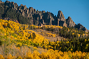 Yellow fall aspen colors below pinnacles of Silver Mountain, seen from Sunshine Campground, Uncompahgre National Forest, Telluride, Colorado, USA.