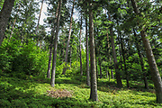 hiking trail along Schluchtsee at Schluhuwanapark, Grafenhausen, State Park , black forest, Germany