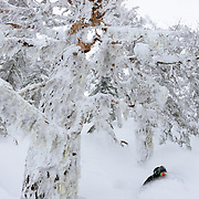 Tyler Hatcher drops a powder turn beneath the lichen laiden trees of the Cascade backcountry.