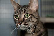 Chemung County Humane Society and SPCA