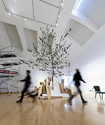 A huge cherry tree fills the interior of an Edinburgh gallery as part of an anarchic new show. <br /> <br /> Standing more than eight metres tall and scraping the ceiling of the University's Talbot Rice Gallery, the tree is the centrepiece of acts of display, a new exhibition from Glasgow-based artist Rob Kennedy.<br /> <br /> The tree was sourced from Edinburgh's Inverleith Park. Over the course of the show the leaves will fall and litter the indoor space. <br /> <br /> The work is a response to two paintings owned by the University, one by David Teniers called Peasants Playing Bowls and a second anonymous copy which is missing a tree and a male figure from the original.