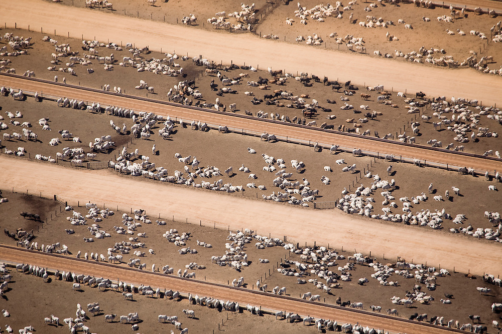 Cattle ranch in Agua Boa, Mato Grosso, Brazil, August 8, 2008..Daniel Beltra/Greenpeace