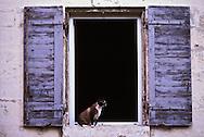 Cat in window, Paris, France