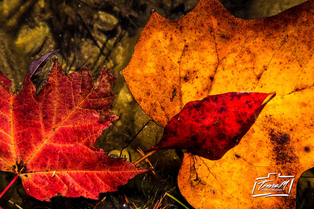 Fall foliage is seen at Hanging Rock State Park near Danbury, N.C., Friday, Oct. 21, 2011. (AP Photo/Gerry Broome)
