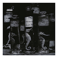 """""""Seahorses (1992/1995). Sleeve artwork for """"Rare On Air: Volume 2"""" (4AD Records/1995). The negative was made in 1992 on Agfapan 25 120 film and hand-printed by the photographer in June 2014, on 12"""" x 16"""" 30.48cm x 40.64cm) Kentmere Kentona G2 fibre paper (long since discontinued as an edition of 10 prints only. The prints are silver gelatin """"lith prints"""" that have been split-selenium toned. Each print is stamped, titled, numbered, dated, signed by myself and comes with a certificate of authenticity. Please email me at info@simon-larbalestier.co.uk for availability and shipping info. All prints are shipped from the United Kingdom. *Stated price does not include shipping."""