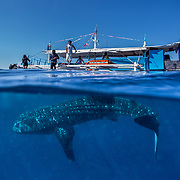 Palawan - Whale Sharks & People - Honda Bay